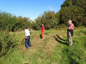 Learning how to use an Austrian scythe in my meadow