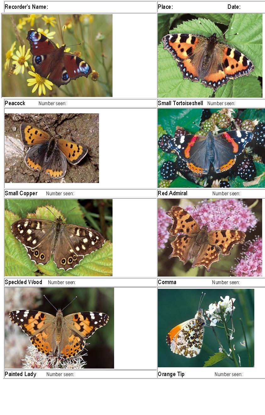 Common Butterflies Id Chart